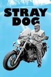 Stray Dog wiki, synopsis