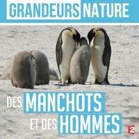Télécharger Grandeurs nature : Des manchots et des hommes Episode 1
